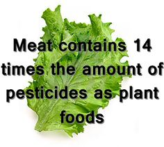 Interesting facts about a vegetarian diet.