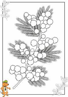 Les mimosas (2/2)