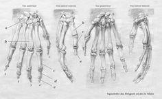 Squelette du Poinget & de la Main 02