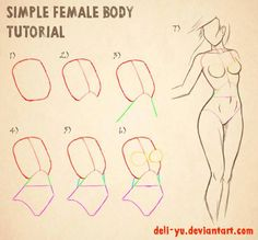 Simple female torso reference by deli-yu on DeviantART.com ★