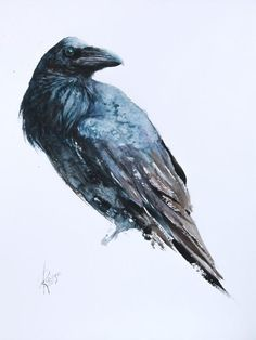 watercolor Types Of Animals, Watercolor Bird, Paintings For Sale, Lovers Art, Pet Birds, Raven, Buy Art, Portrait, Artist