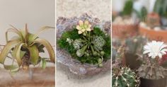 5 Must-Have Plants That Will Purify The Pouted Air In Your Home