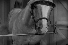 Mister Ed, Ed the Pool Player ,1965, S5,