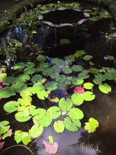 Koi and lotus pond Photo by LBWestlake
