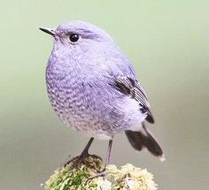 All Birds, Birds Of Prey, Little Birds, Love Birds, Pretty Birds, Beautiful Birds, Animals Beautiful, Nature Animals, Animals And Pets