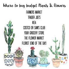 where to buy budget plants and flowers