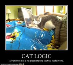 Cat logic #meme