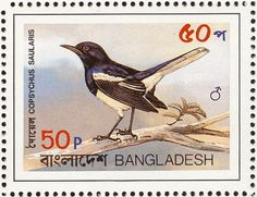 Oriental Magpie-Robin stamps - mainly images - gallery format