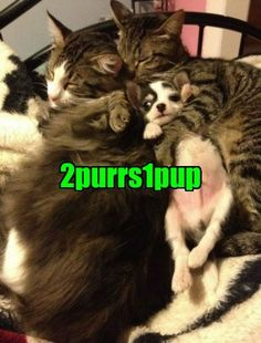 LoL by: TuckerBentley . Tagged: 2girls1cup , infamous , dogs , cuddle , Cats , funny Share on Facebook http://sulia.com/channel/cats/f/ff14d0d6cc6d71000bf4b7c18c857d2e/?pinner=119866023