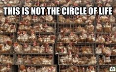 This is not the circle of life! Eating animals and their bi products are not healthy they are the leading cause of all diseases including cancer, diabetes and heart disease. Eliminating these products can reverse disease. They are not healthy. They are making you sick.