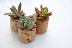 Mini Succulent Cork Magnets Mixed Set of 3 por AlissaRose en Etsy