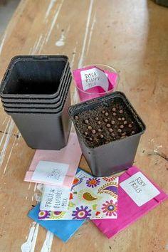 Dream Garden, Horticulture, Gardening Tips, Flowers, Anna, Victoria, Plants, Garden Planning, Royal Icing Flowers