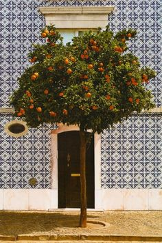 Is that an orange tree from the streets of Valencia, Spain  ??? I can't be sure. I can only hope and imagine that those oranges will be freshly squeezed into my glass on some patio someplace warm and soaked in sun.  There's probably a cool breeze blowing in from the matching blue Mediterranean Sea and I just bet there's a siesta waiting to be had in that afternoon sun.