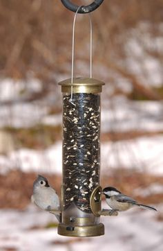 Aspects Seed Small Brass bird feeder capacity Antique Brass Finish with 2 feeding ports. Zinc die-cast top, bottom and feed stations. Squirrel Proof Bird Feeders, Birch Logs, Hanging Bird Feeders, Wildlife Decor, Backyard Birds, Metal Casting, Lawn And Garden, Antique Brass, Gardening