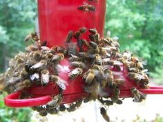 Bees Out of a Hummingbird Feeder RE: Keeping Bees Away from a Hummingbird Feeder. Going to try the mint first, then vaselineRE: Keeping Bees Away from a Hummingbird Feeder. Going to try the mint first, then vaseline How To Attract Hummingbirds, How To Attract Birds, Attracting Hummingbirds, Keep Bees Away, Hummingbird Garden, Hummingbird Feeder Recipe, Hummingbird Nectar, Hummingbird Habitat, Homemade Hummingbird Food
