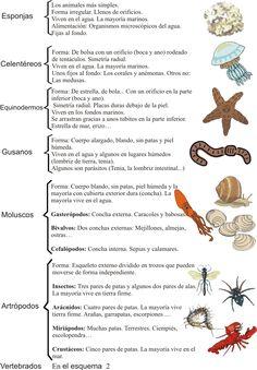 3ciclojuliannieto.blogspot     comienzotercero.webnode.es    CARACTERÍSTICAS DE LOS GRUPOS DE INVERTEBRADOS 1  CARACTERÍSTICAS DE LOS GRUP...