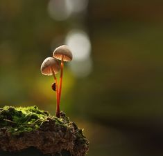 Magical World of Mushrooms Macro Photography by Vyacheslav Mishchenko. Ukrainian photographer Vyacheslav Mishchenko (previously: Tale of Nature: Magical Mushroom Art, Mushroom Fungi, William S Burroughs, Photographie Macro Nature, Artistic Photography, Nature Photography, Image Photography, Mushroom Pictures, Fotografia Macro
