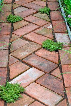 Thymes (Thymus) amid brick pathway   Copyright:©judywhite / GardenPhotos.com
