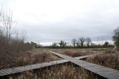 Wet-Meadow-Source-River-Norges-Territoires-11 « Landscape Architecture Works | Landezine