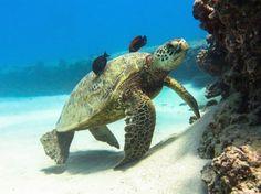 Turtle ThinkstockPhotos-469827119