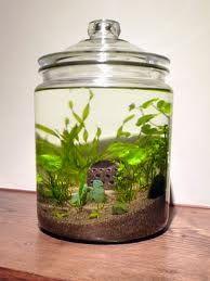 Bottle aquarium - Google 検索