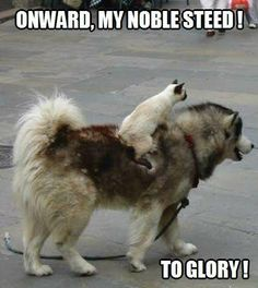 Onward, my noble steed!  To glory!