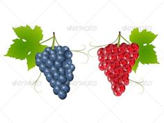 Grape  #GraphicRiver         Photo-realistic vector illustration. grape Vector illustration contains gradient mesh elements. You can be scaled this objects to any size without loss of resolution.     Created: 9July13 GraphicsFilesIncluded: VectorEPS Layered: Yes MinimumAdobeCSVersion: CS Tags: fresh #fruit #grape #leaf #leaves #vine #wine