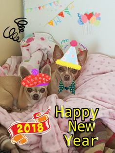 Chihuahua Wishes for 2018