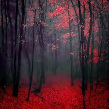 Red-Forest-Beautiful