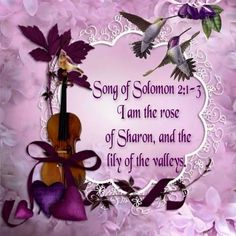 Song of Songs 2.1