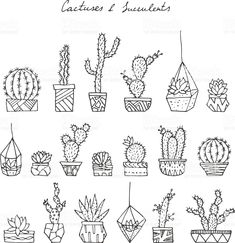 Vector hand drawn cactuses and succulents. cizim Vector hand drawn cactuses and succulents. Succulents Drawing, Cactus Drawing, Cacti And Succulents, Bullet Journal Art, Bullet Journal Themes, Bullet Journal Inspiration, Succulent Tattoo, Succulent Wall Art, Cactus Doodle