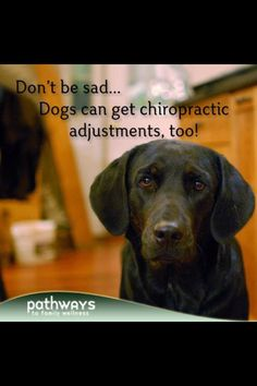 Don't be sad.... Dogs can get chiropractic adjustments, too!