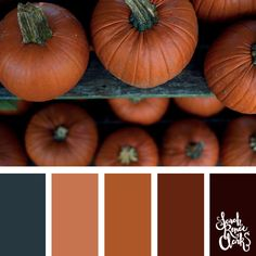 Color-palette-144-pumpkin