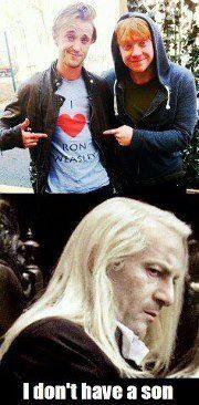 Dignity Draco.