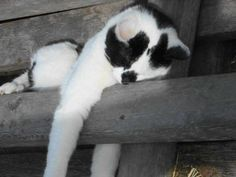 Funny Cats rule! #funnycat #funnycats #cats more funny cats here: http://www.funnycatsblog.com