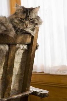 The scent of vinegar can help keep cats off furniture or any unwanted place.