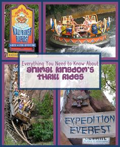 We can tell you everything you need to know about the awesome thrill rides at Animal Kingdom!