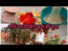 Organic Liquid Fertilizer, Messages, Garden, Youtube, Garten, Lawn And Garden, Gardens, Text Posts, Tuin