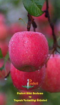 I Love Fruits . A beautiful creation . Wonderful Nature and Beautiful Spring! Apple Fruit, Fruit And Veg, Red Apple, Fruits And Vegetables, Fresh Fruit, Fruit Plants, Fruit Garden, Fruit Trees, Exotic Fruit