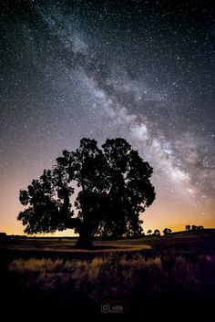 Holm oak and milky way by Vicente Gonzalez on 500px