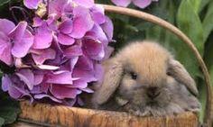 #conejo #roedores #mascotas