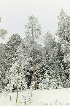 Winter snow in the Sandia Mountains of New Mexico.