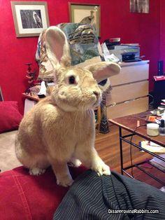 Disapproving Rabbits