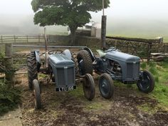 Two TE20 Feguson Tractor