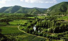 Wine: whatever happened to fitou? | Life and style | The Guardian