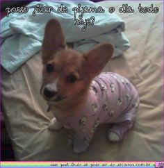 I don't know what this says, but the corgi puppy in pajamas made it worth repinning