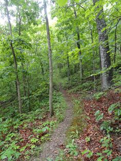 Hiked 11 miles on a rainy National Trails Day. Ozark Trail, Middle Fork / John Roth Memorial Section, June 7, 2014