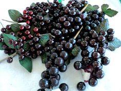 Artificial Dark Purple Grape Cluster Picks  by DocksideDesignsEtc, $6.75