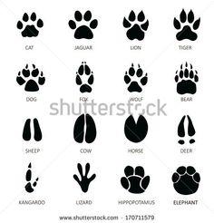 Animals footprints Mais
