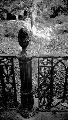 Parque de otoño. Blanco y negro.